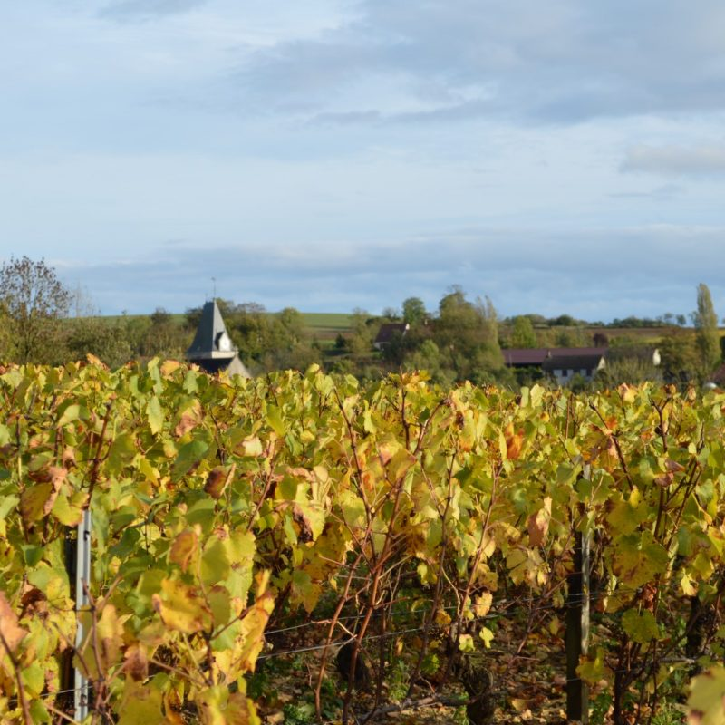 clocher de l'église de Viviers vue des vignes